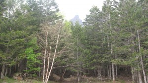 Below treeline, with one of Yatsugatake's peaks towering above.
